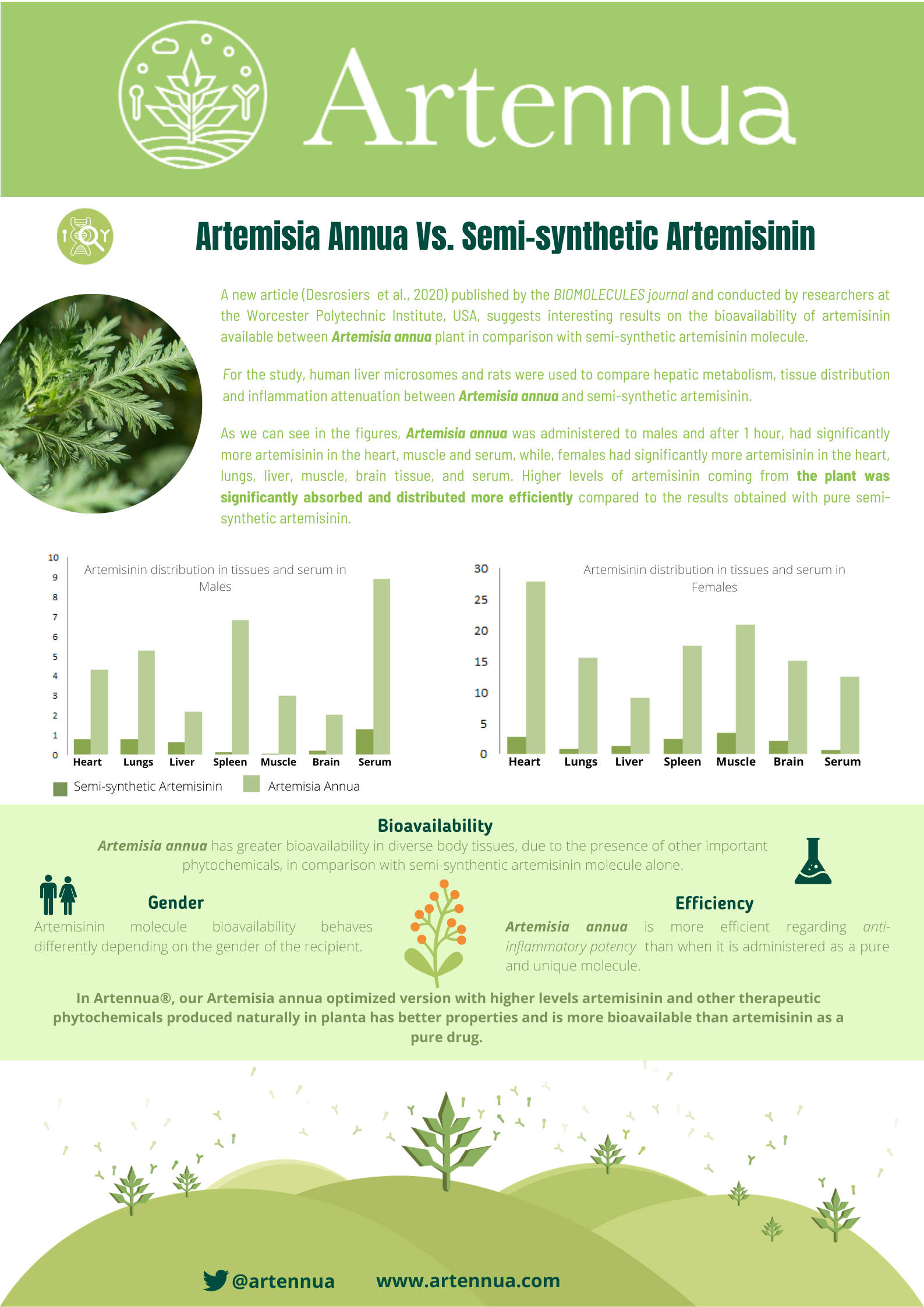 Infographic Artemisia Annua vs. Semi-Synthetic Artemisinin